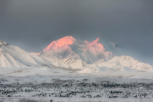 My last day in the Denali National Park, Alaska for the season and traveling on the park road at first light I was greeted by the  the mountain having never looked so visually dynamic. The Alpenglow appeared in a more magenta color than I have seen before on Denali/Mount McKinley (9/09).  This photograph is protected by the U.S. Copyright Laws and shall not to be downloaded or reproduced by any means without the formal written permission of Ken Conger Photography.