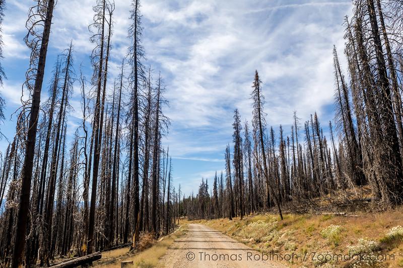 Strawberry Wilderness Wildfire Aftermath