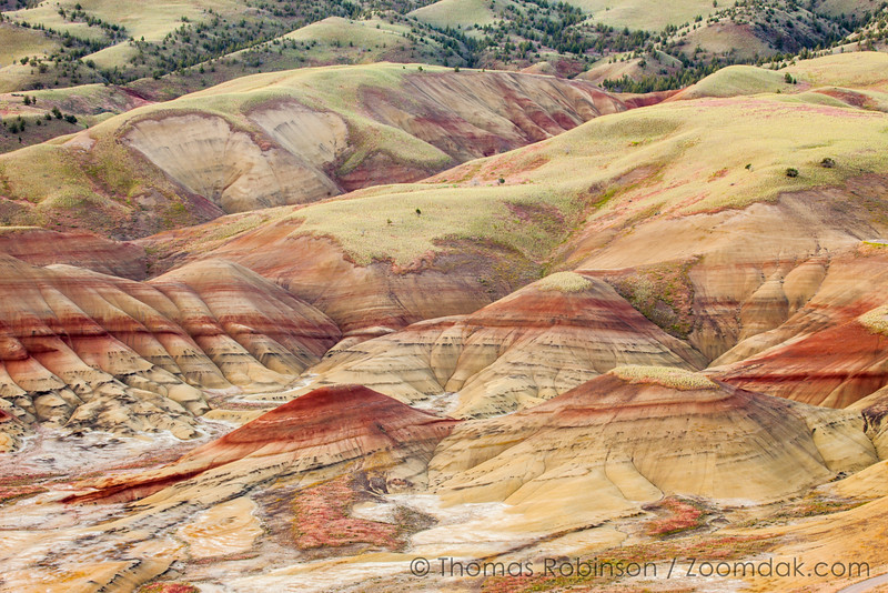 Golden Morning at the Painted Hills