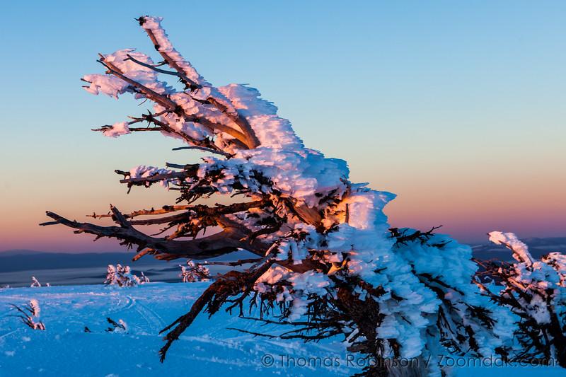 Dawn Freeze