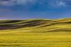 Sunlit Palouse Hills