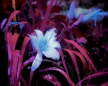 Flowers_00006.jpg