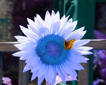 Blue Radience.jpg