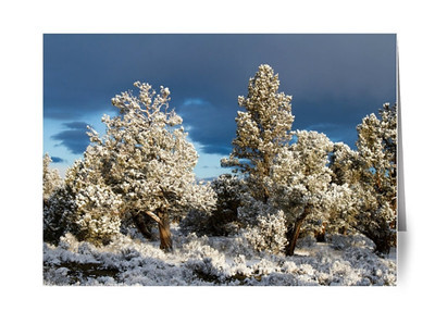 Snow-covered Juniper Trees