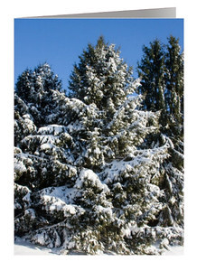 Snowy Evergreens Trees
