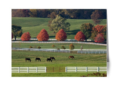 Maryland Horse Country