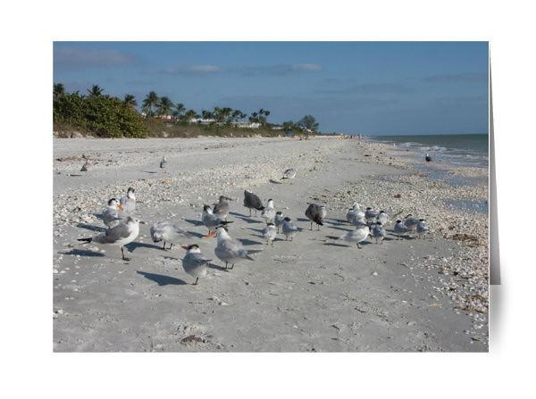 Sanibel Island Shore Birds