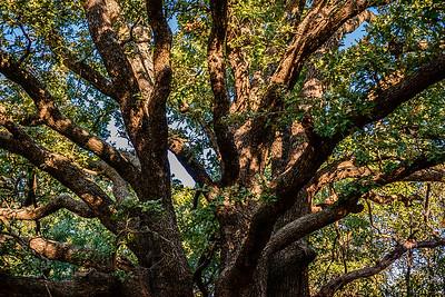 Trees-5674
