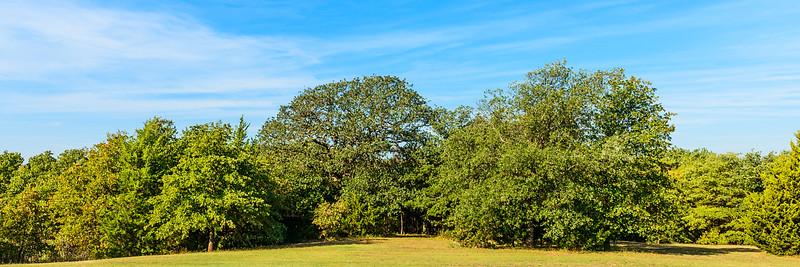 Trees-5708