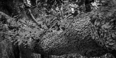 Trees-5675