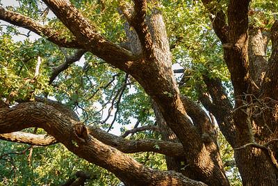 Trees-5696