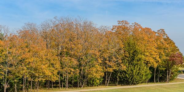Trees-5705
