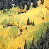 Yellows and greens of changing aspen on Fremont Pass between Copper Mountain and Leadville.