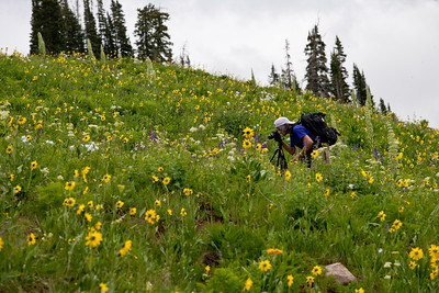 Photographer and wildflowers near Crested Butte, Colorado.