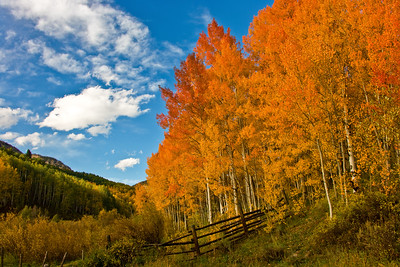 Light dances across the fall colors of Aspen on Ohio Pass near Gunnison and Crested Butte, Colorado.