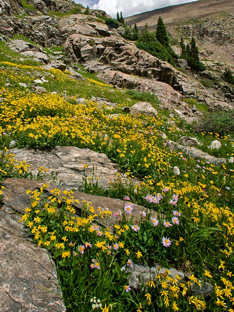 Wildflowers outside Breckinridge.