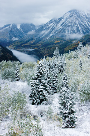 Snow flocked Spruce trees and valley fog above the Crystal River on McClure Pass, between Carbondale and Paonia, Colorado. (#1)