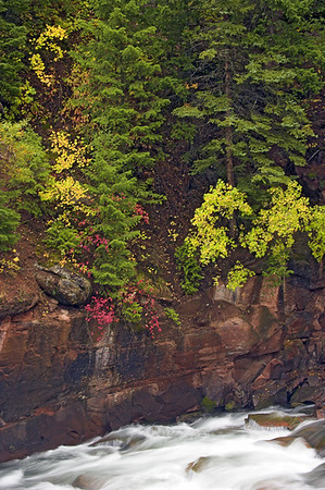 Golden Aspen and Spruce cling to the side of the canyon to form a natural rock garden above the Crystal River between Carbondale and McClure Pass.