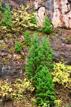 Golden Aspen and vibrant Spruce form a natural rock garden along the Crystal River between Carbondale and McClure Pass.