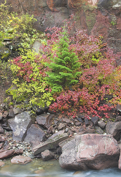 Golden Aspen and a delicate Spruce form a natural rock garden above the Crystal River between Carbondale and McClure Pass.