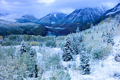 Snow flocked Spruce trees and valley fog above the Crystal River on McClure Pass, between Carbondale and Paonia, Colorado. (#2)