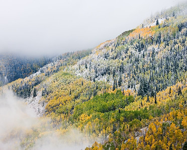 Snow flocked Spruce trees and valley fog above the Crystal River on McClure Pass, between Carbondale and Paonia, Colorado. (#3)