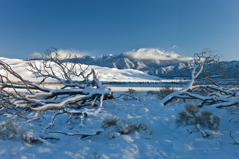 Snow flocked pines frame Cleveland Peak rising above Medano Creek in the Great Sand Dunes National Park and Preserve.
