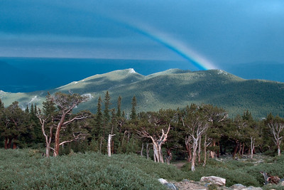 Rainbow at Bristlecone Pine area on Mount Evans near Denver.