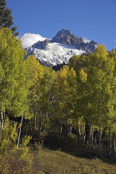 Stand of Aspen trees near Mount Sneffels