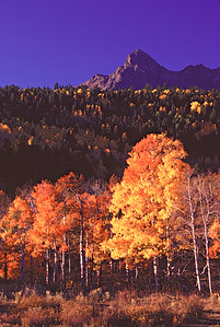 Fall colors on Dallas Divide near Ridgway Colorado