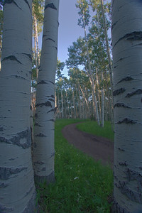 Aspen lined road in the early morning near Mount Sneffels, outside Ridgway, Colorado.