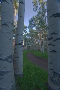 Aspen lined road in the early morning near Mount Sneffels, outside Ridgway, Colorado.