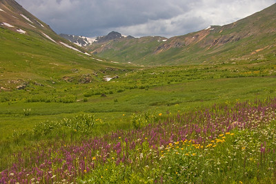 California Gulch wild flowers  near Silverton Colorado