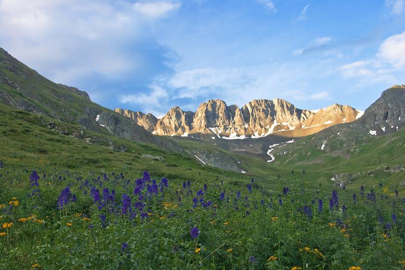 Wildflowers in American Basin between Lake City and Silverton.