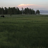 Bison grazes peacefully at dusk Yellowstone Lake.