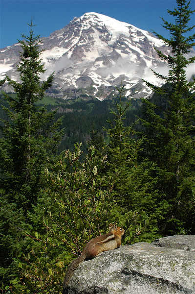 Captain of the Guard; Chipmunk sunning in shadow of Mt. Ranier, Washington State