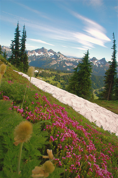 Mountain Majesty; Mount Ranier National Park, WA State