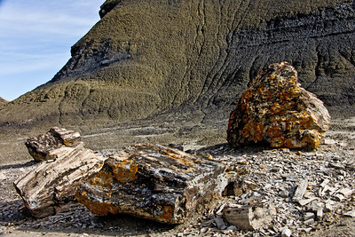 Colorful petrified logs,  Bisti de Nat Zin near Farmington, New Mexico.