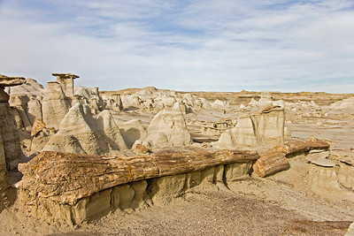 Petrified log, Bisti de Nat Zin near Farmington, New Mexico.