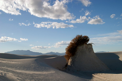Plant island at White Sands National Monument, near Alamogordo, New Mexico.