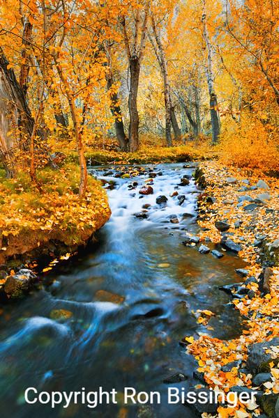 Flowing Aspen