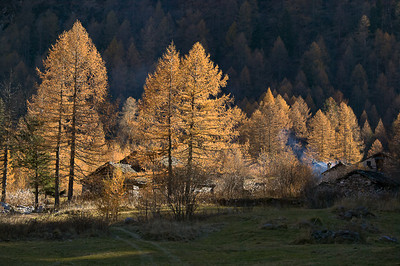 CAV46568 - Autunno in Valmalenco