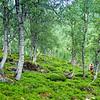 Green hills...