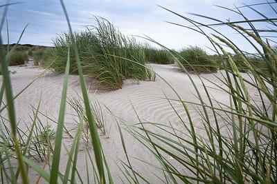 CAD19474 - Dune alla foce del Po
