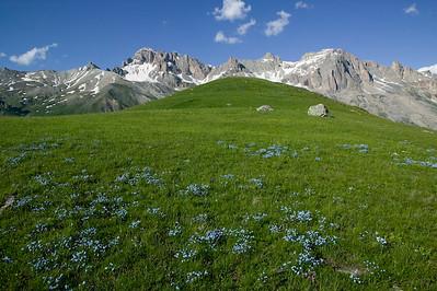 CAV55314 - Prato alpino al Col du Lautaret