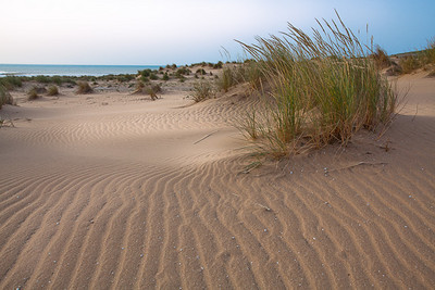 CAD17431 - Duna litorale