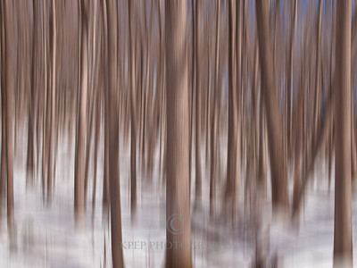 motion blur photograph of a forest in the winter. To read my article on motion blur and panning please visit this page. http://kpepphotography.blogspot.com/2011/10/panning-photography.html