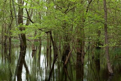 Parco naturale di Migliarino San Rossore