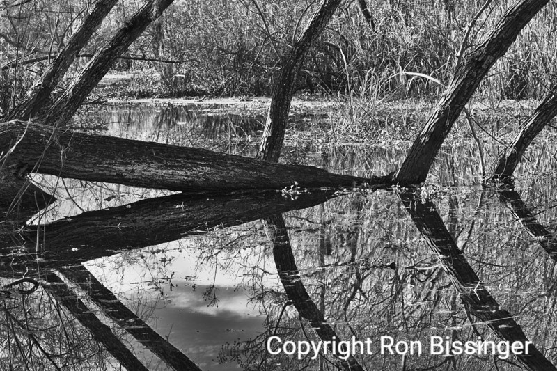 Brazos Bend Reflections