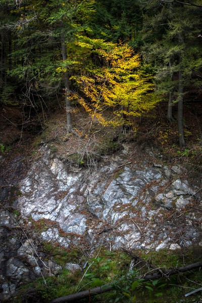 A small tree hangs precariously on the edge of Vermont's Quechee Gorge shows its fall colours.